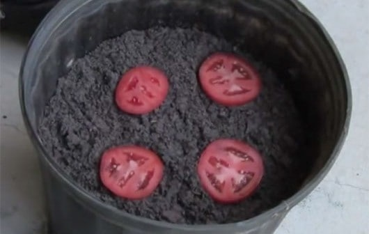 Growing Tomatoes The Easy Way!